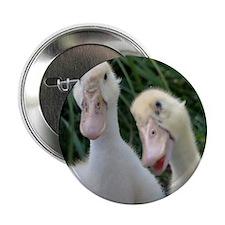 """DSC_0046 2.25"""" Button"""