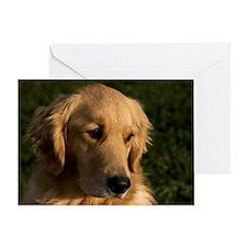 (2) golden retriever head shot Greeting Card