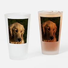 (15) golden retriever head shot Drinking Glass