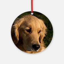 (15) golden retriever head shot Round Ornament