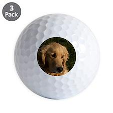 (15) golden retriever head shot Golf Ball