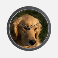 (15) golden retriever head shot Wall Clock