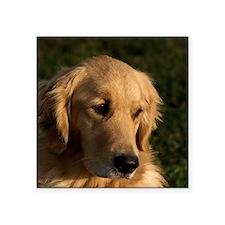 "(15) golden retriever head  Square Sticker 3"" x 3"""