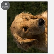 (9) golden retriever head shot Puzzle