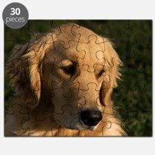 (4) golden retriever head shot Puzzle