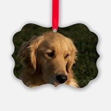 (10) golden retriever head shot Ornament