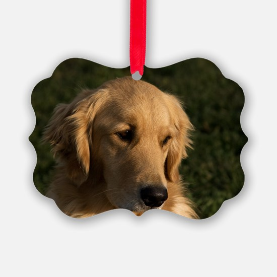 (10) golden retriever head shot Ornament