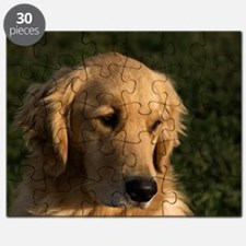 (10) golden retriever head shot Puzzle