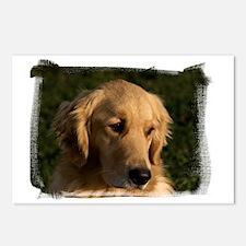 (16) golden retriever hea Postcards (Package of 8)