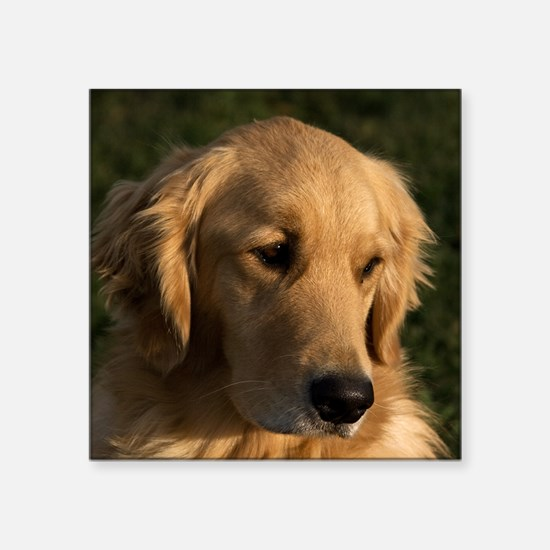 "(15s) golden retriever head Square Sticker 3"" x 3"""