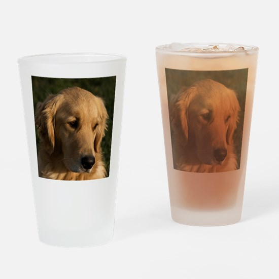 (15s) golden retriever head shot Drinking Glass