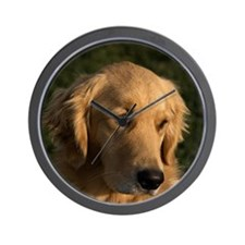 (14) golden retriever head shot Wall Clock