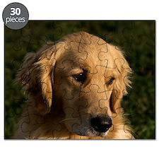 (14) golden retriever head shot Puzzle