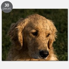(14) golden retriever head shot Puzzle