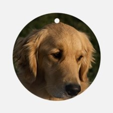 (14) golden retriever head shot Round Ornament