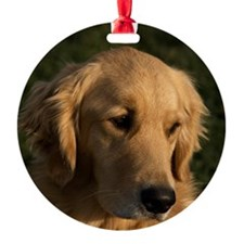 (14) golden retriever head shot Ornament