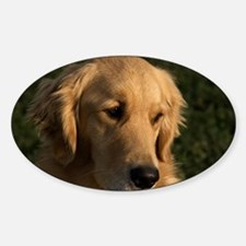 (12) golden retriever head shot Sticker (Oval)