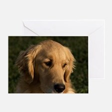 (14) golden retriever head shot Greeting Card