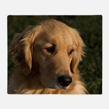 (12) golden retriever head shot Throw Blanket
