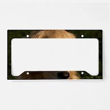 (12) golden retriever head sh License Plate Holder