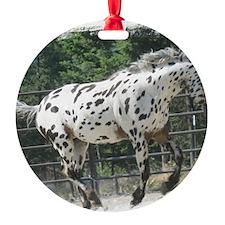 RT Ornament