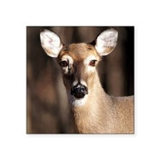 "Whitetail Deer Doe Square Sticker 3"" x 3"""