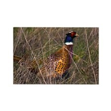 (3) Pheasant  407 Rectangle Magnet