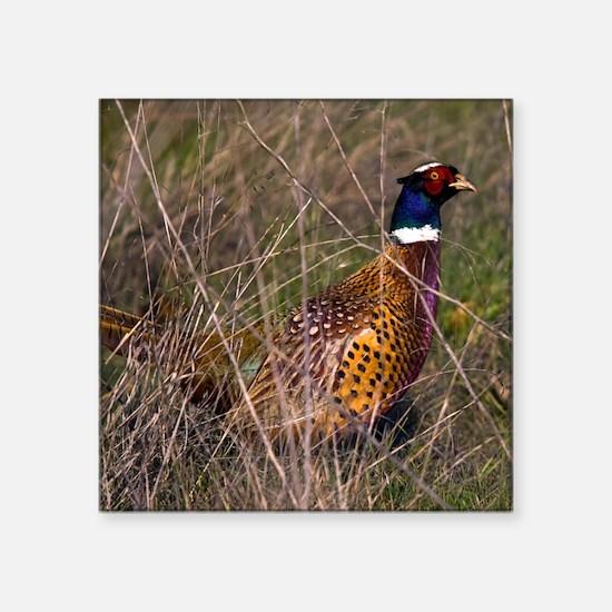 "(15) Pheasant  407 Square Sticker 3"" x 3"""