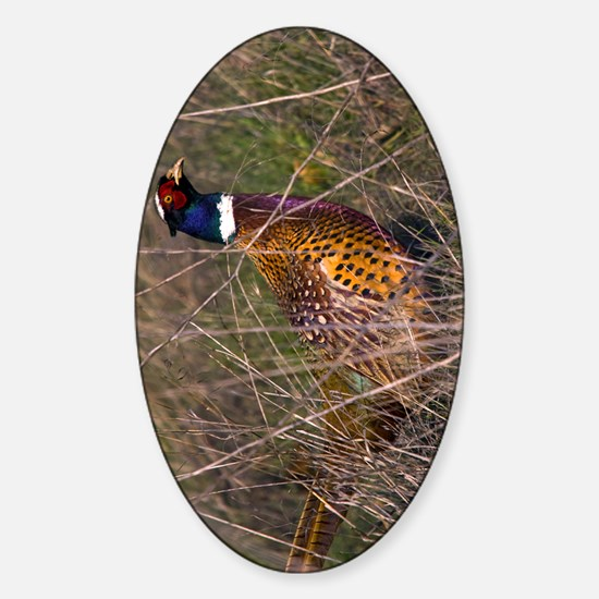 (11p) Pheasant  407 Sticker (Oval)