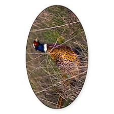 (9) Pheasant  407 Decal