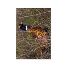 (9) Pheasant  407 Rectangle Magnet