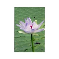waterlily close dry brush Rectangle Magnet