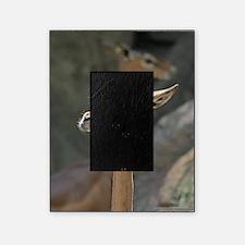 Gerenuk Picture Frame