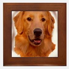 golden retriever portrait Framed Tile