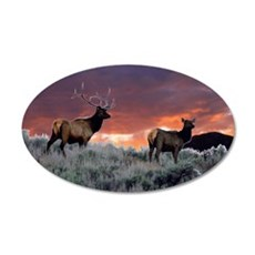 elk sunset 35x21 Oval Wall Decal