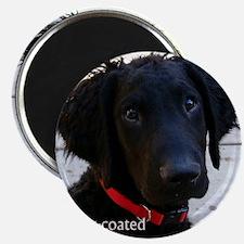 Puppy head image Magnet