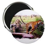 "Asian Running Tigers Wild Animal 2.25"" Magnet (10"