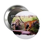 "Asian Running Tigers Wild Animal 2.25"" Button (100"