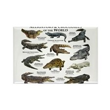 Alligator & Crocodiles of the World Rectangle Magn