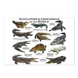 Alligator Postcards