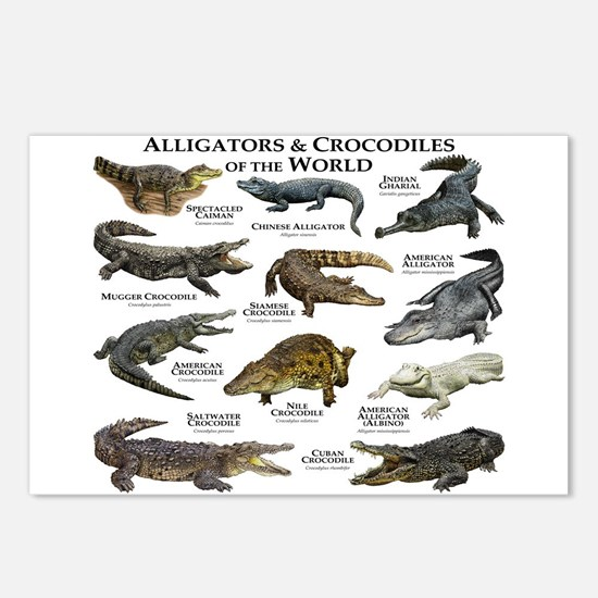 Alligator & Crocodiles of the World Postcards (Pac