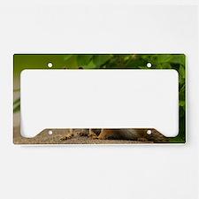 _DSC0395 License Plate Holder