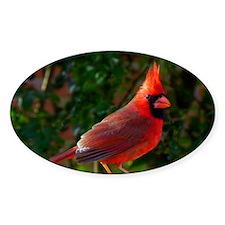 cardinalPP Decal