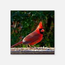 "cardinalPil Square Sticker 3"" x 3"""