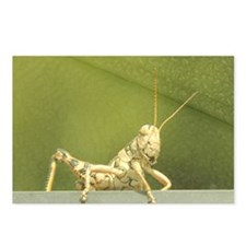 grasshopper 1 Postcards (Package of 8)
