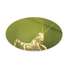 grasshopper 1 Oval Car Magnet