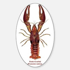 Rusty Crayfish Oronectes Rusticus Decal