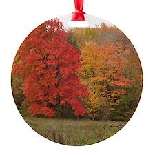 Blaze in Fall-KBox Ornament