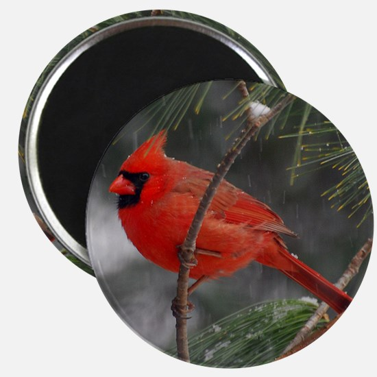 Male Cardinal 02-02-10 340 Magnet