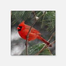 "Male Cardinal 02-02-10 340 Square Sticker 3"" x 3"""